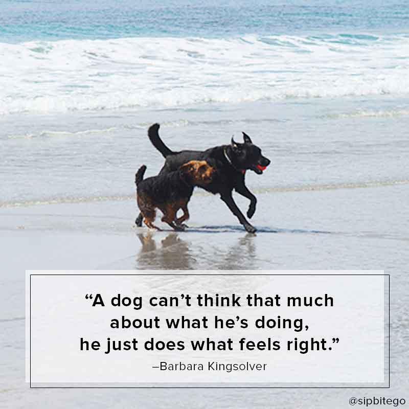 dog friendly beach in carmel beach quote
