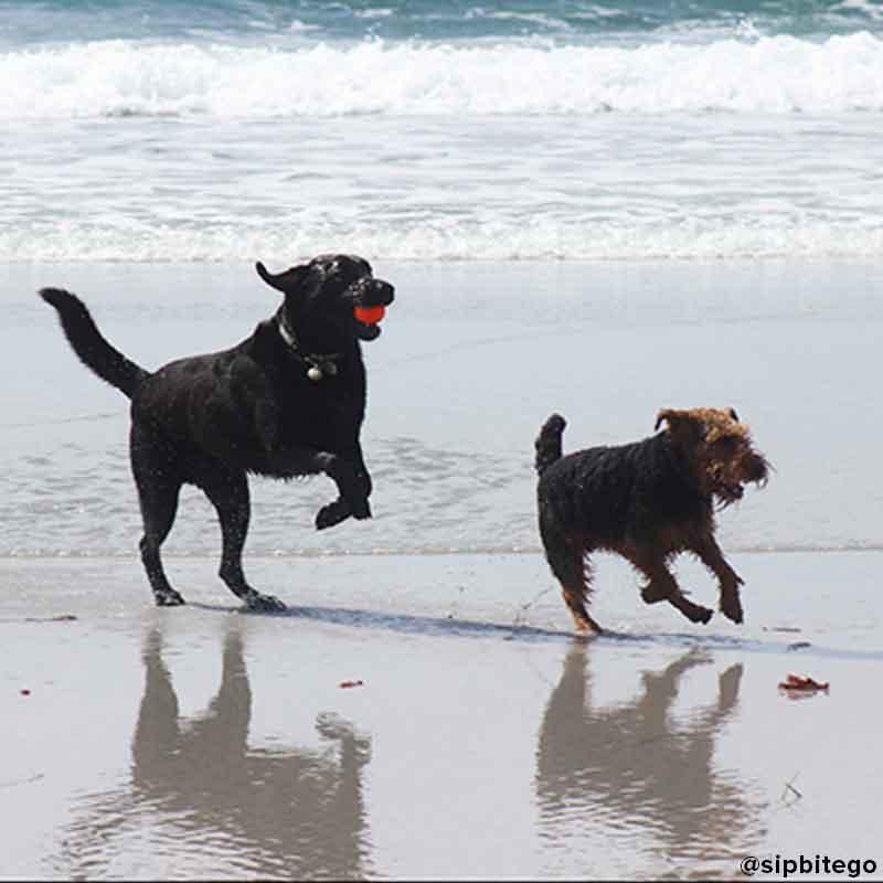 Carmel beach dogs