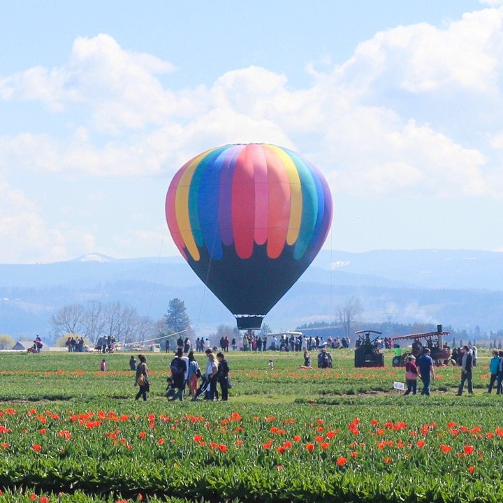 hot air balloon with a crowd at the wooden shoe tulip festival in oregon
