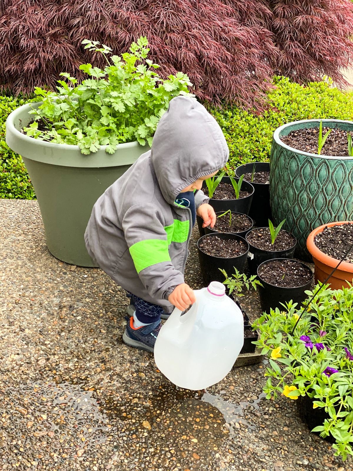 Teaching kids how to garden with herbs for cooking