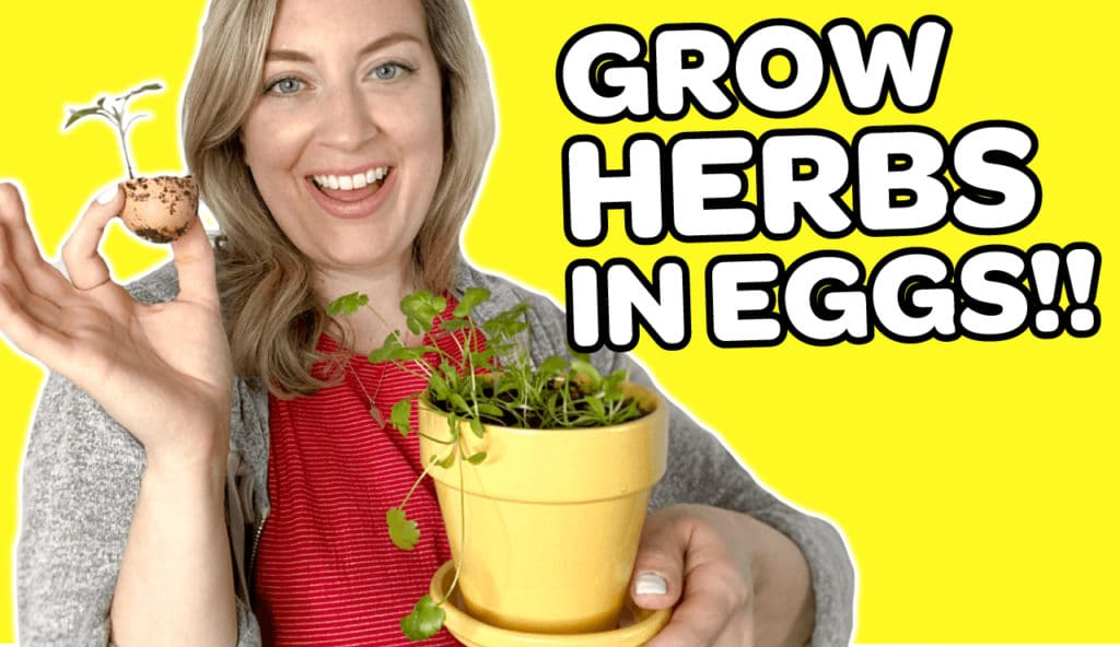 Video on How To Grow Herbs In Eggs Sip Bite Go