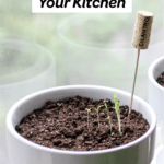 herbs growing in kitchen tips with text
