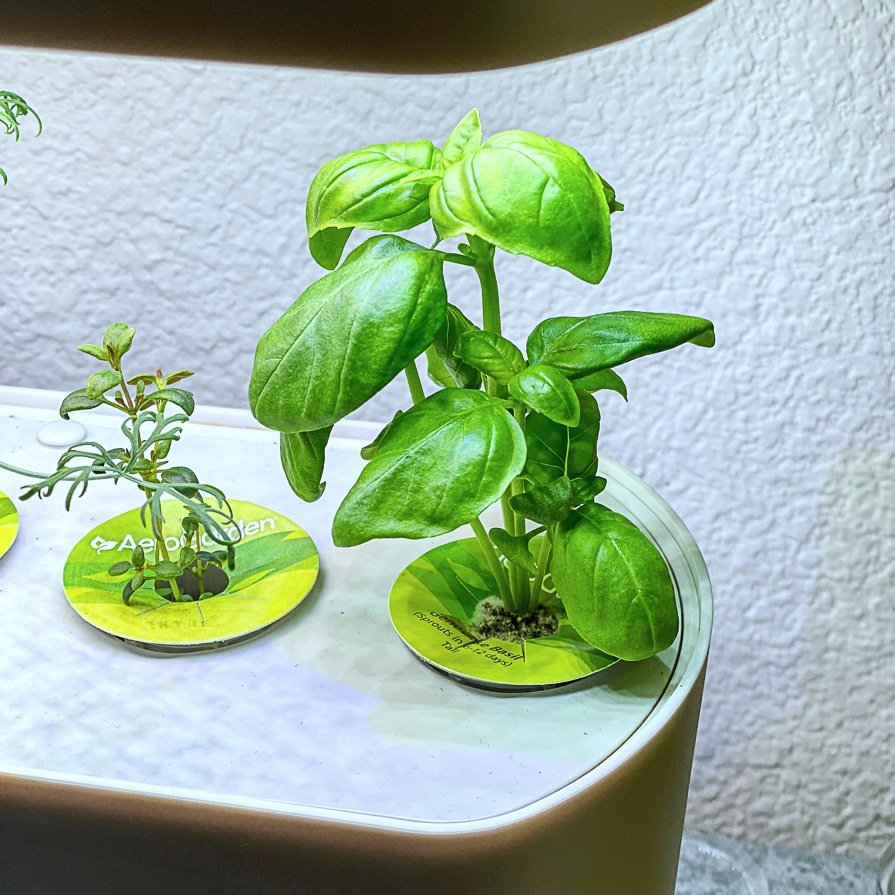 growing herbs for the first time in the Aerogarden feature