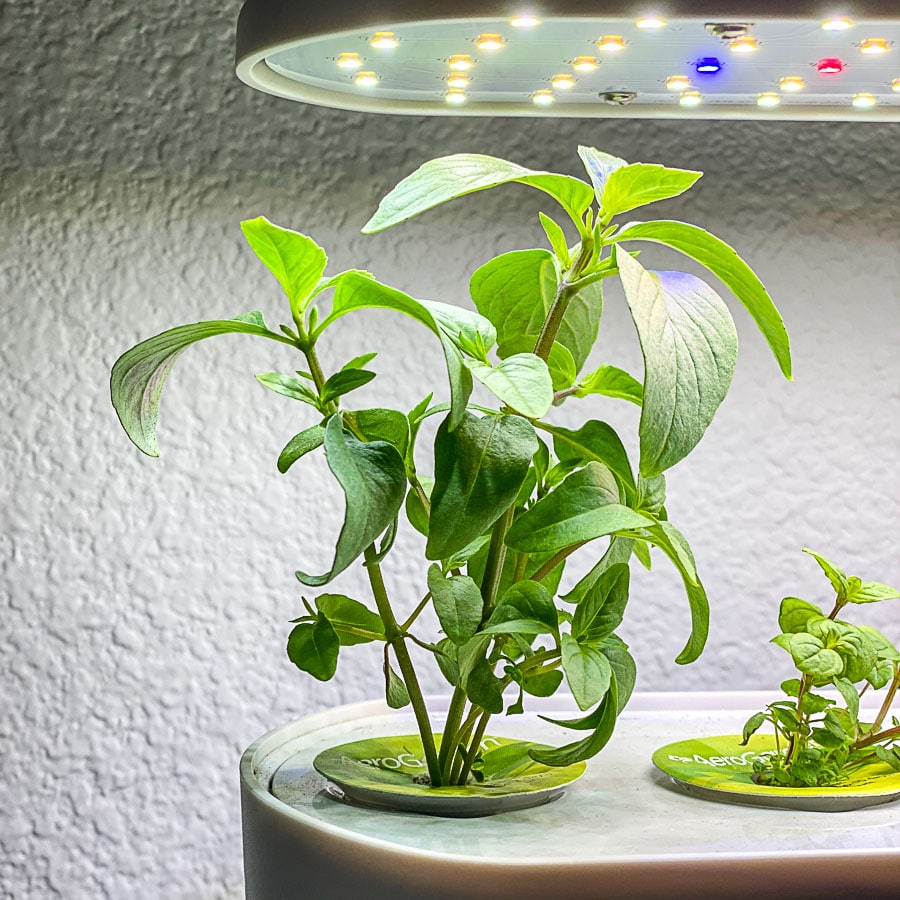 aerogarden herb system with thai basil growing feature pic
