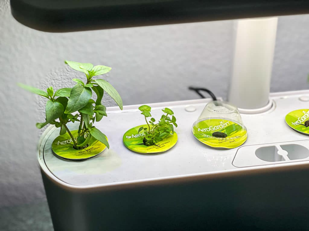 Aerogarden sprouting herbs