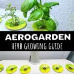 AeroGarden grow guide for beginners pinterest pin